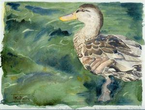 2010-06-watercolor-cayuga-mallard
