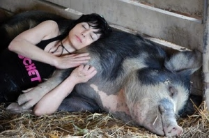 cute-farm-joan-jett-pig-sanctuary-vegan-Favim_com-69877