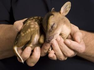 cute-baby-animals-7