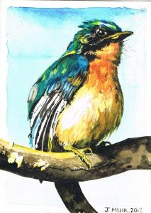 tickells-blue-flycatcher-copy